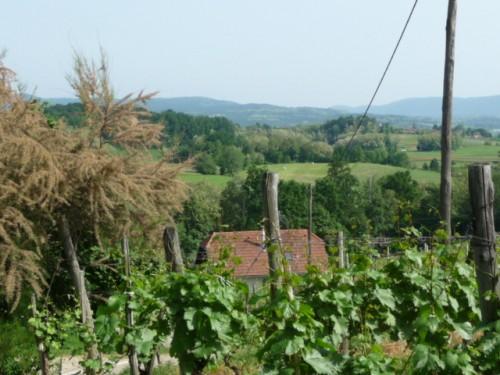 Slovenia Countryside