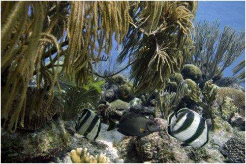 curacao%20diving