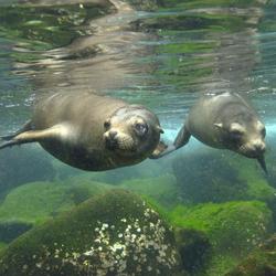 Travel to the Galapagos Islands of Ecuador – Episode 351