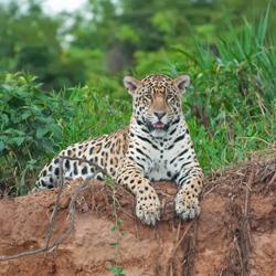 Travel to The Pantanal, Brazil – Episode 405