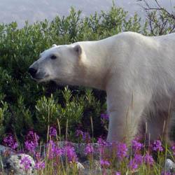Travel to Arctic Manitoba – Episode 411