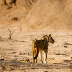 Travel to Namibia's Skeleton Coast – Episode 466