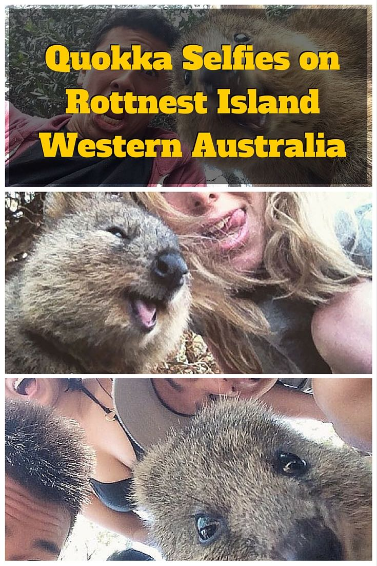 Quokka Selfies on Rottnest Island – Western Australia