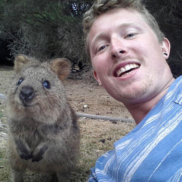 Quokka Selfies on Rottnest Island