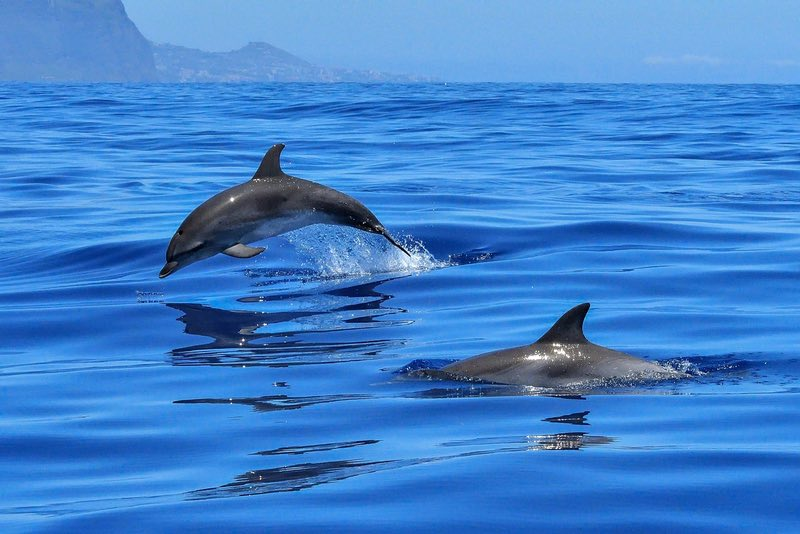 Dolphins at Exmouth - Western Australia