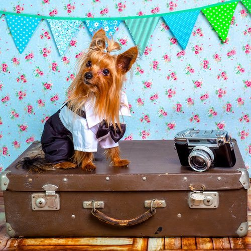 10 Tips for Taking a Dog on a Plane