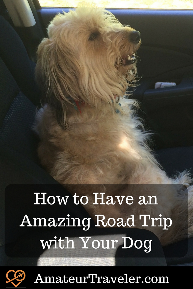How to Have an Amazing Road Trip with Your Dog