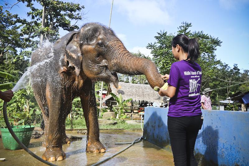 Volunteering at the Elephant Forest Refuge, Thailand