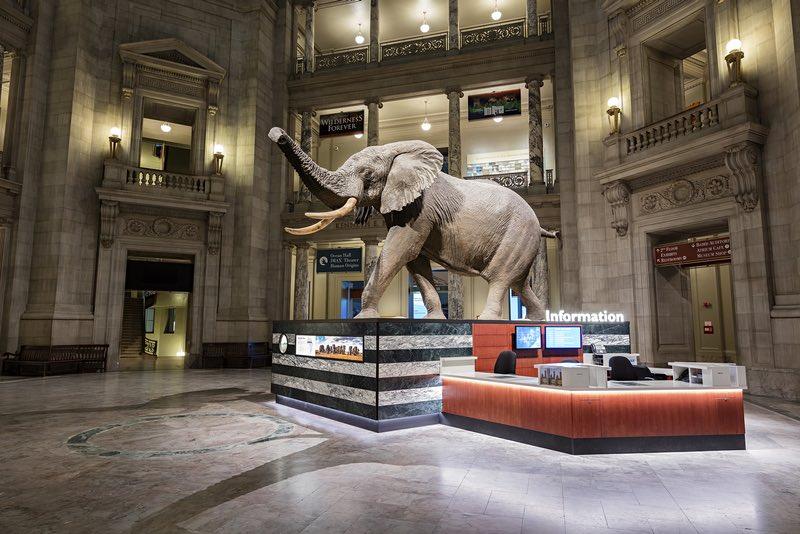 National Museum of Natural History Rotunda