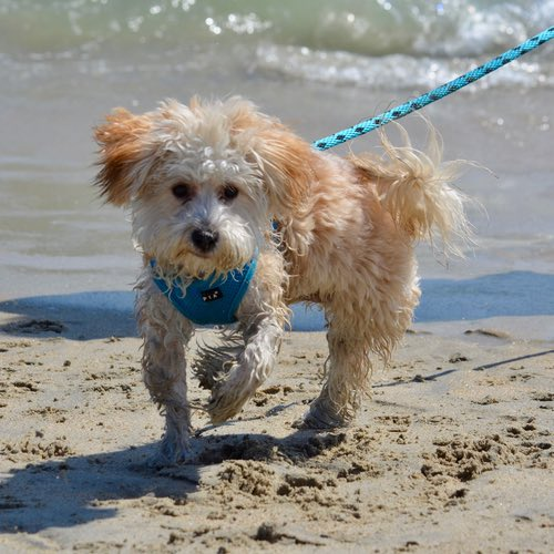12 Dog-Friendly Beaches in Florida