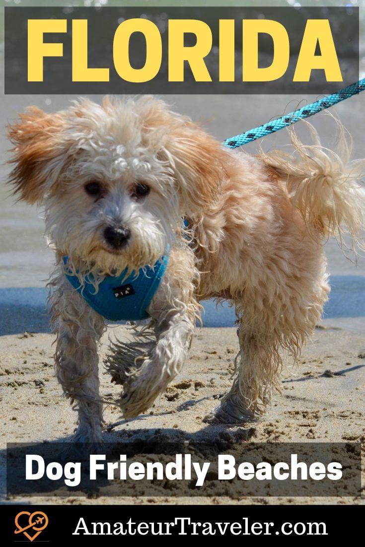 12 Dog-Friendly Beaches in Florida | dog friendly beach holidays #travel #trip #vacation #florida #usa #beach #dog #dog-friendly #pets #dogs