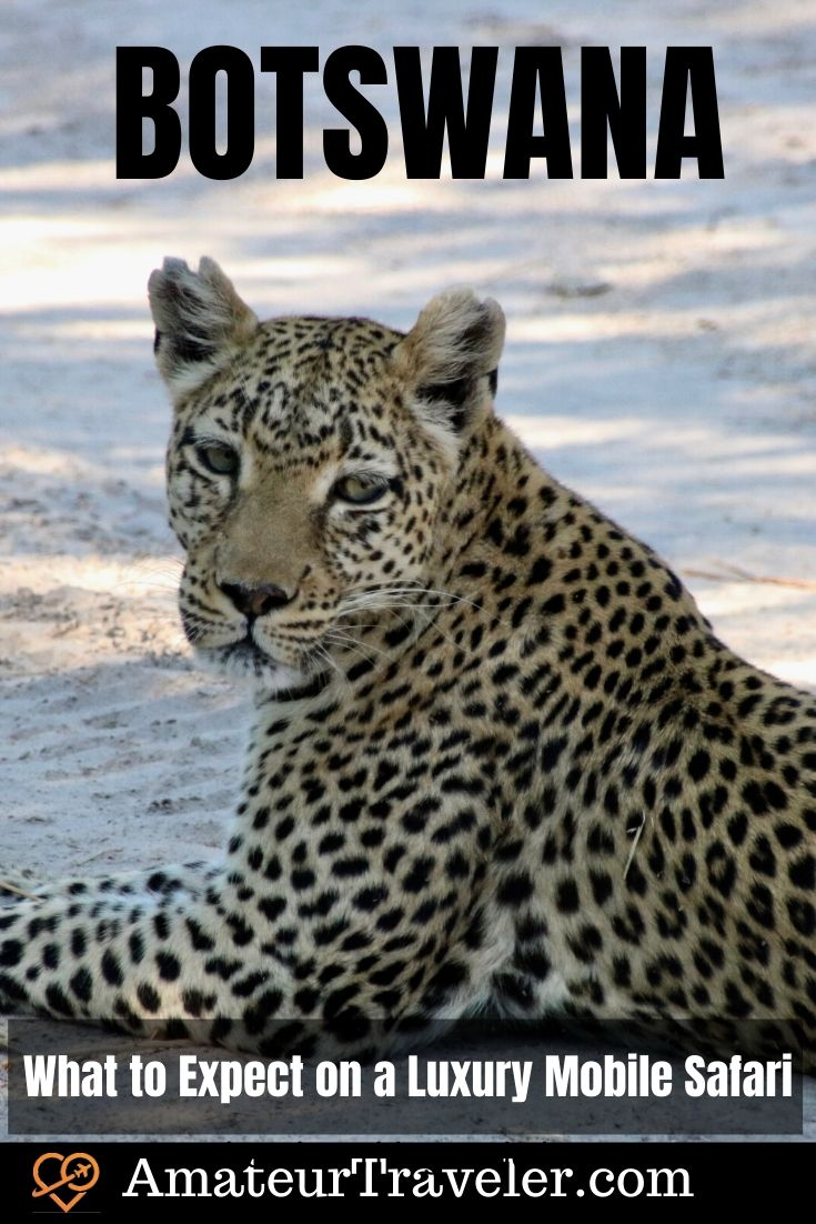 Luxury Mobile Safari in Botswana - What to Expect | When to go to Botswana #africa #safari #botswana #okavango #delta #travel #trip #vacation #luxury #photography