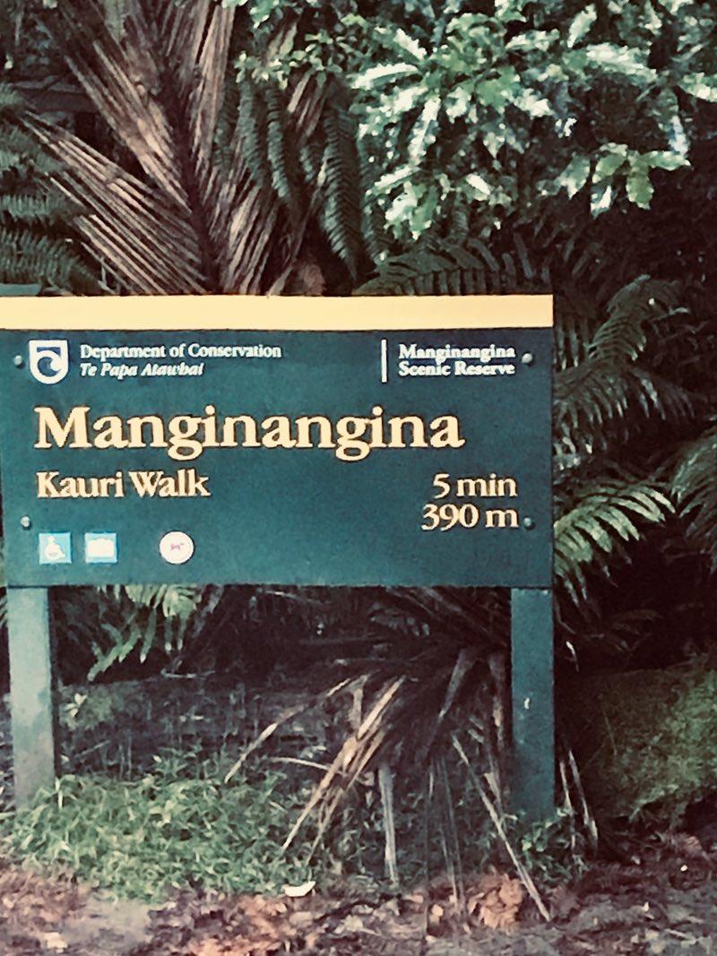 Manginangina walk - Puketi Forest