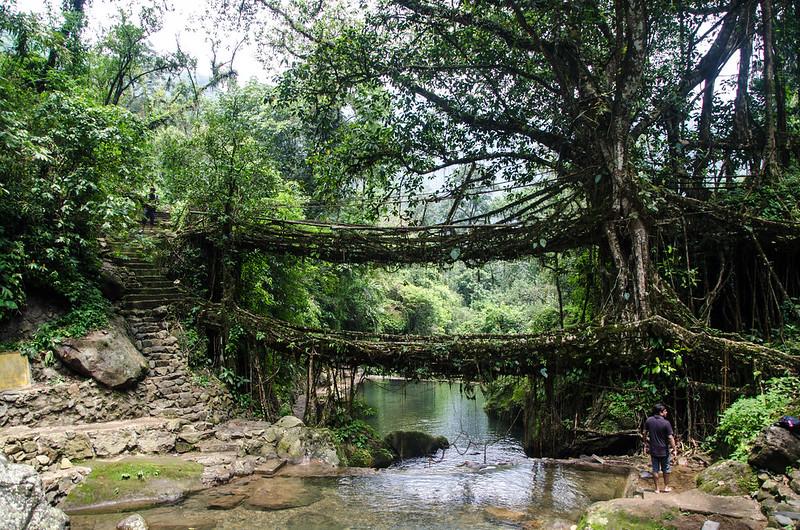 Double Root Bridges, Nongriat