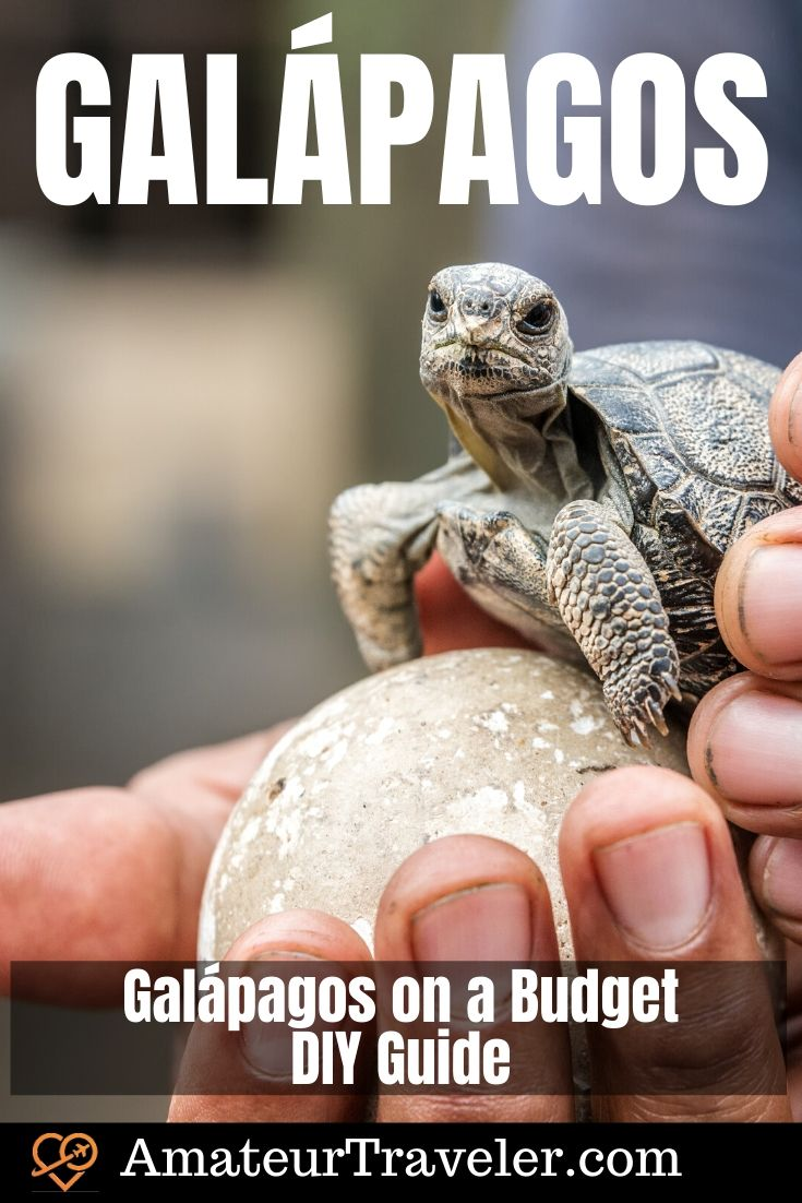 Galápagos on a Budget - DIY Guide | What to do in the Galapagos | Where to go in the Galapagos #travel #trip #vacation #galapagos #budget