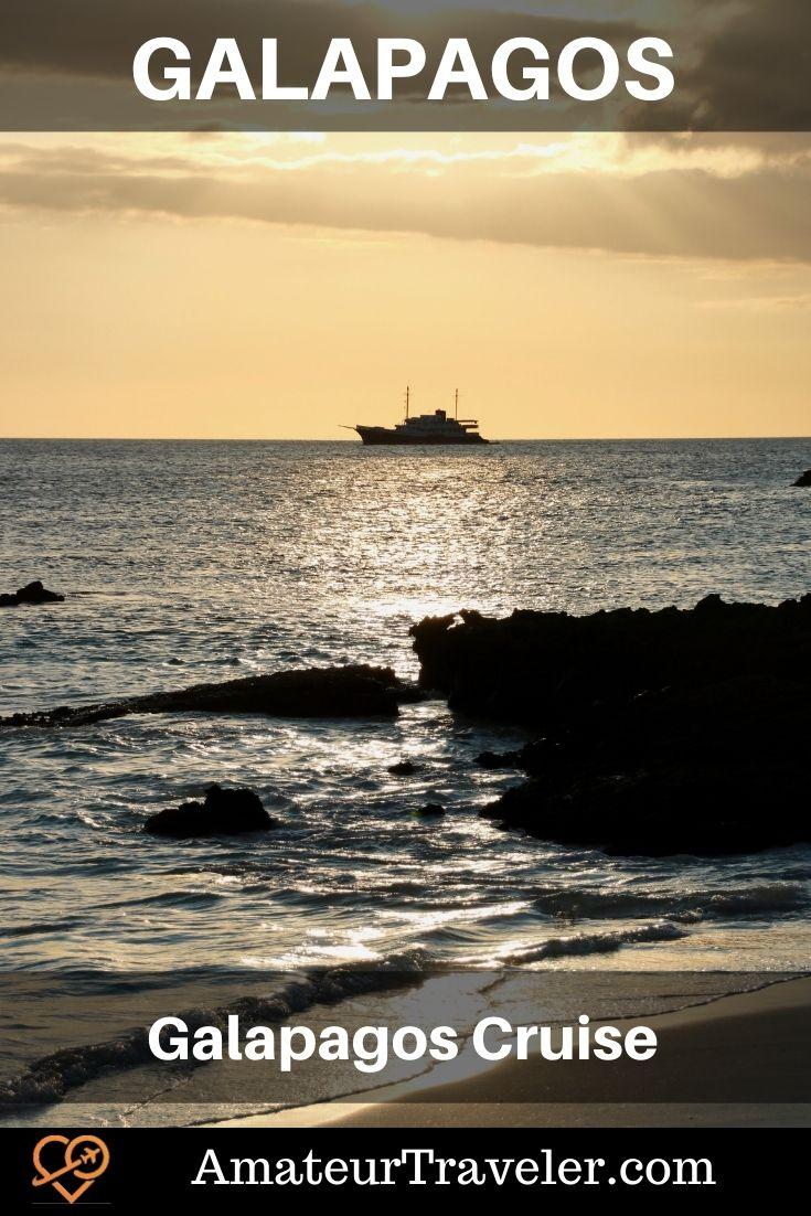Galapagos Cruise on Quasar's Evolution #galapagos #islands #thingstodoin #cruise #sealion #turtle #bird #boobie #tortoise #travel #trip #vacation