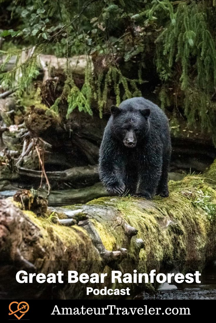 Travel to the Great Bear Rainforest, British Columbia (Podcast) #travel #british-columbia #canada #wildlife #boat #cruise