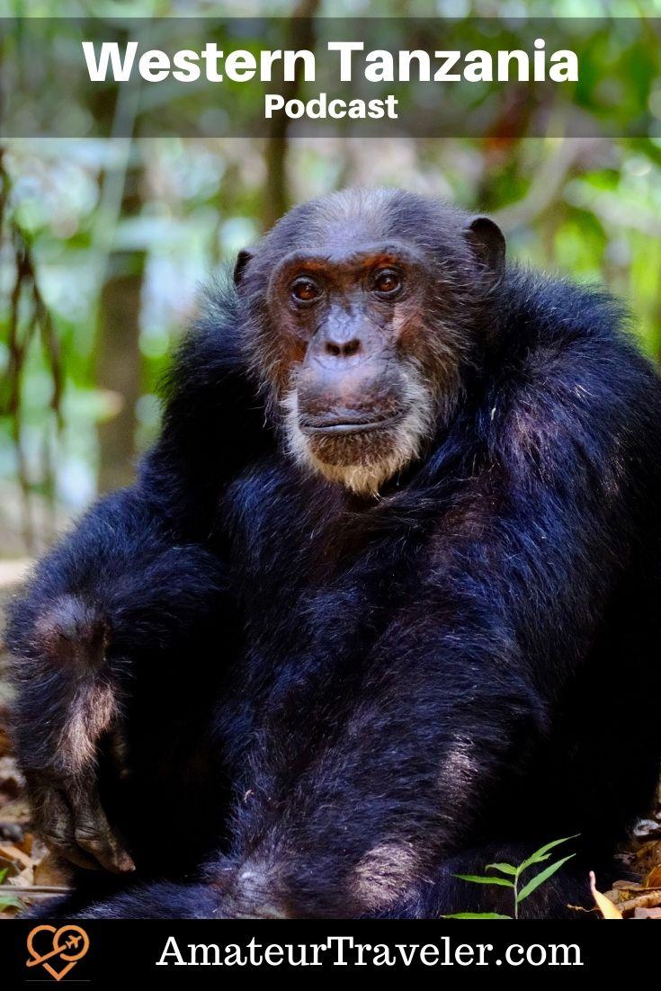 Travel to Western Tanzania   Tanzania Safari   Katavi National Park (Podcast)   Mahale Mountains National Park #tanzania #chimp #chimpanzee #safari #travel #trip #vacation #africa