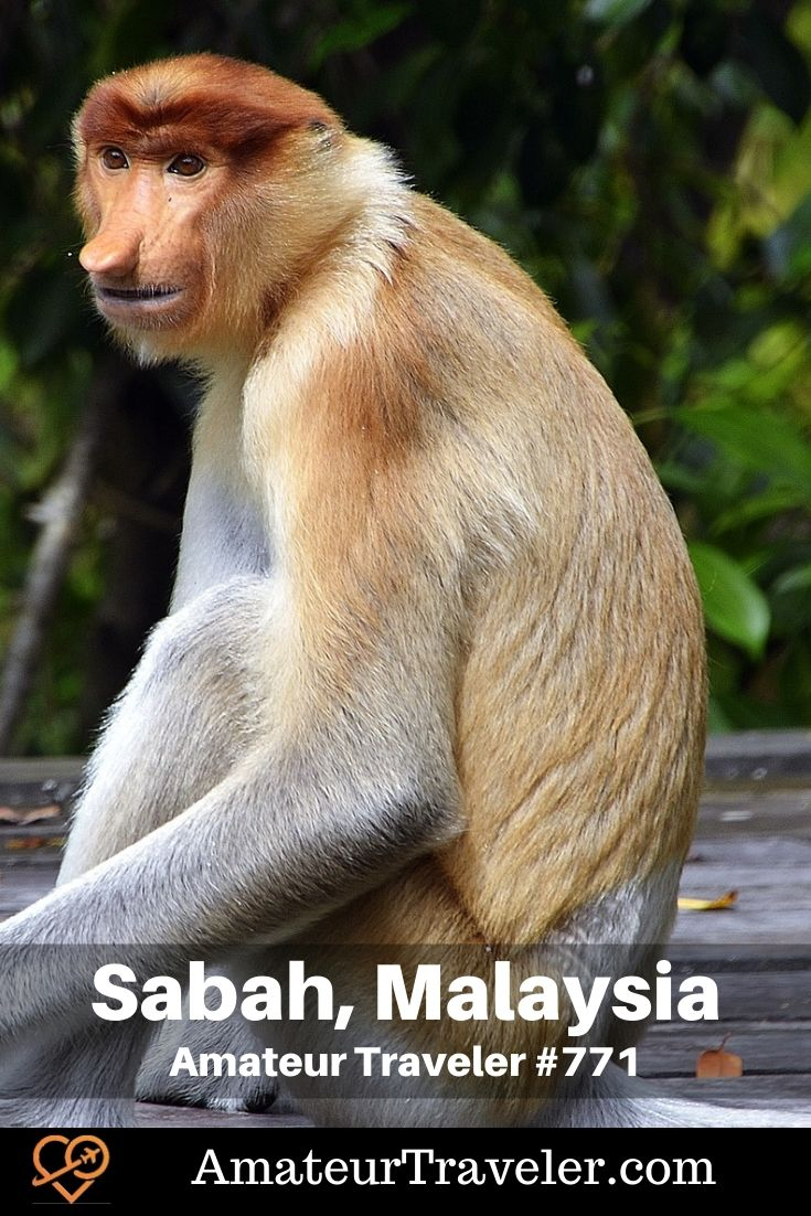 Places of Interest in Sabah (Podcast) | Things to do in Sabah, Malaysia #malaysia #sabah #beach #wildlife #orangatang #beaches #travel #trip #vacation