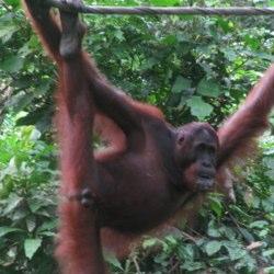Travel to Borneo (Sarawak and Sabah) – Episode 222